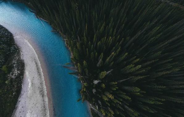 Картинка лес, деревья, природа, река, вид сверху