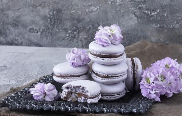 Картинка цветы, flowers, violet, macaron, макаруны