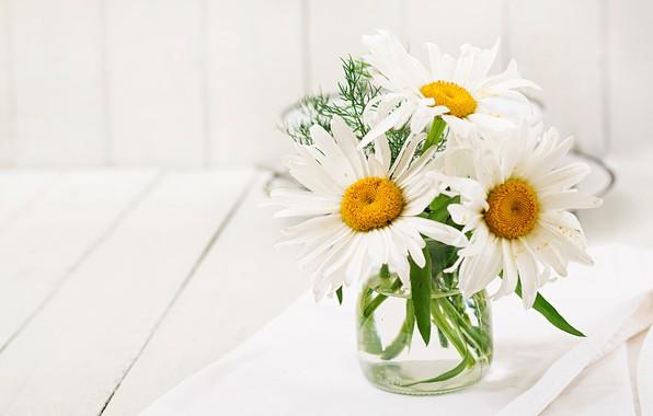 Картинка лето, ромашки, букет, белые