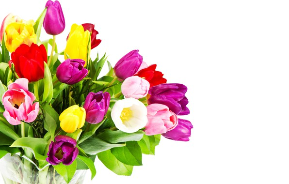 Картинка цветы, букет, фиолетовые, тюльпаны, красные, белый фон, розовые, разноцветные, жёлтые