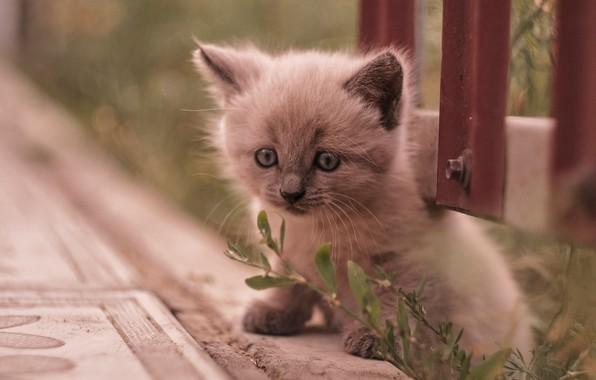 Картинка малыш, мордочка, котёнок