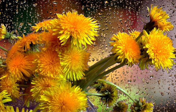 Картинка капли, дождь, букет, Одуванчики