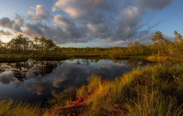 Картинка осень, лес, трава, облака, пейзаж, закат, природа, отражение, болото, Карелия, Vaschenkov Pavel