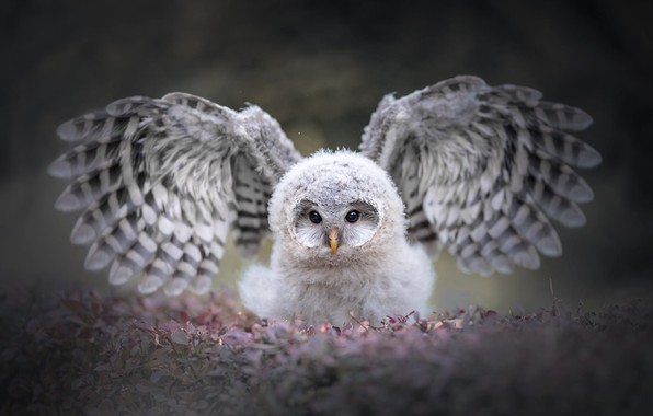 Картинка глаза, взгляд, листья, природа, серый, фон, сова, птица, портрет, крылья, пух, красотка, птенец, взмах, боке, …