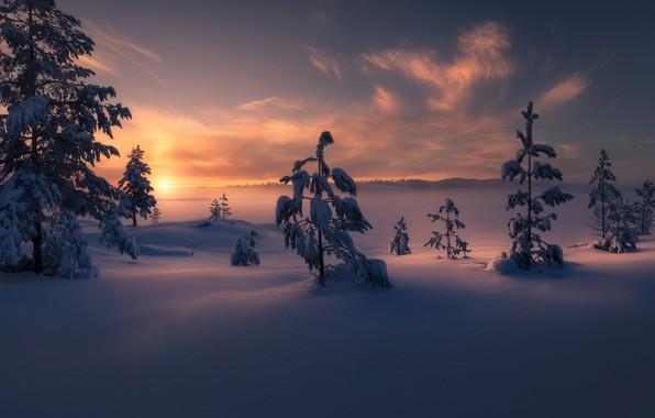 Картинка зима, снег, деревья, закат, Норвегия, сугробы, Norway, Рингерике, Ringerike