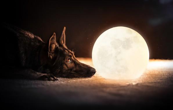 Картинка друг, шар, собака