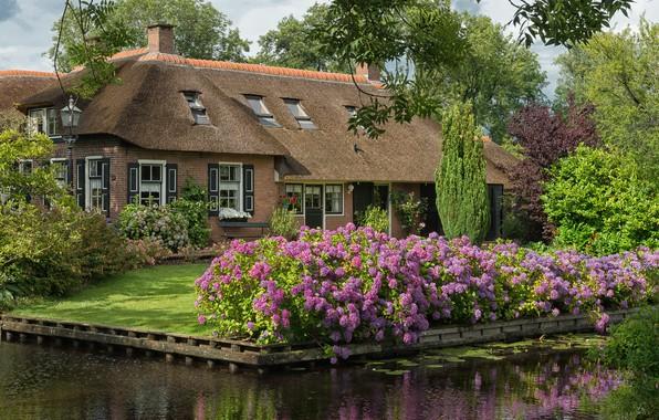Картинка дизайн, дом, канал, Нидерланды, Голландия, озеленение