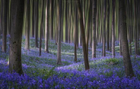 Картинка лес, цветы, весна