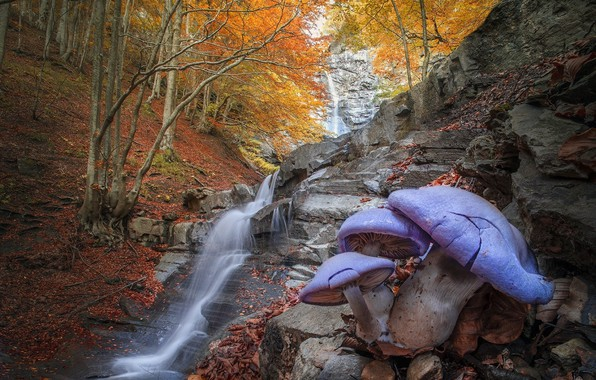 Картинка осень, лес, деревья, пейзаж, природа, камни, грибы, водопад, каскад, Roberto Aldrovandi