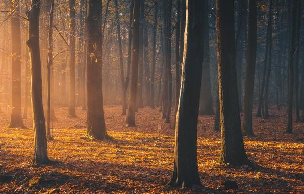Картинка осень, лес, свет, light, forest, autumn, Tomczak Michał