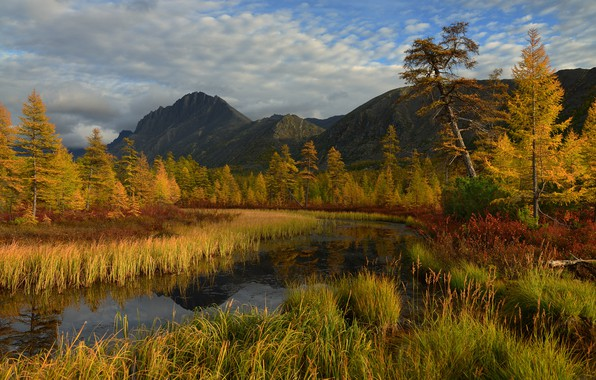 Картинка осень, лес, небо, трава, облака, деревья, горы, река, берег, желтые, Россия, речка, водоем, сосна, золотая …