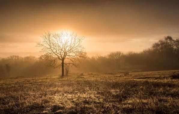 Картинка ночь, природа, туман, дерево
