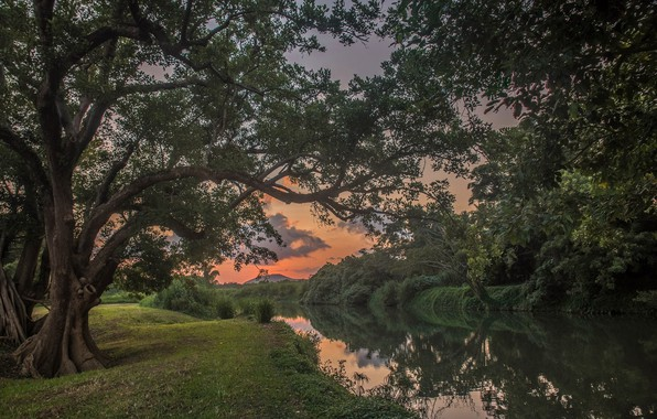 Картинка Закат, Деревья, Река