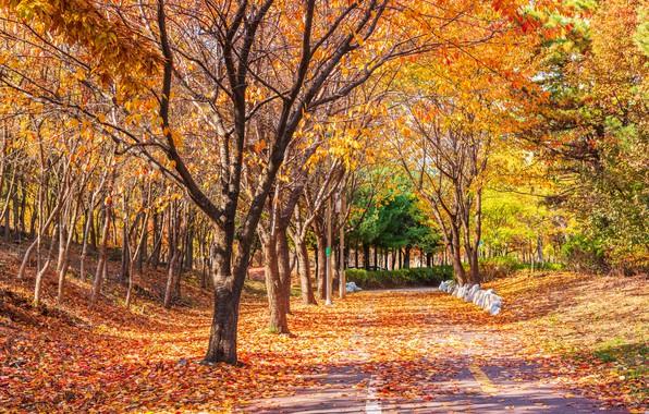 Картинка дорога, осень, листья, деревья, парк, road, nature, park, autumn, leaves, tree