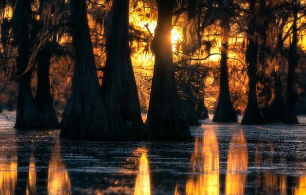 Картинка лес, свет, деревья