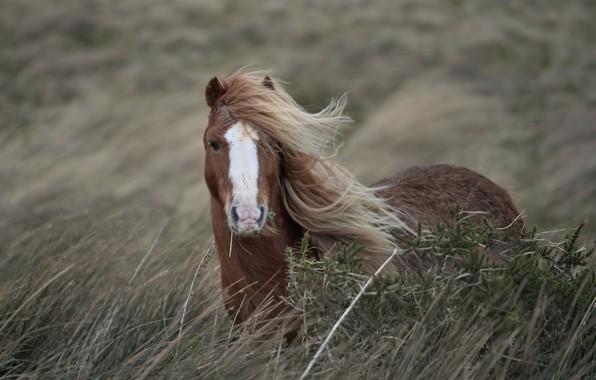 Картинка природа, конь, ветер