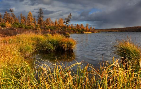 Картинка осень, трава, деревья, пейзаж, тучи, природа, озеро, растительность, леса, Колыма, Максим Евдокимов