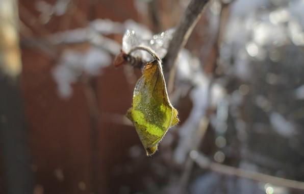 Картинка лед, зима, листья, снег
