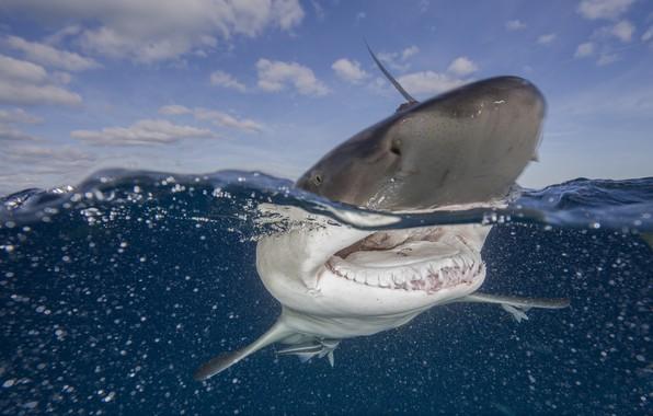 Картинка вода, океан, акула, пасть