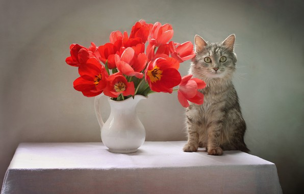 Картинка кошка, кот, цветы, стол, животное, тюльпаны, кувшин, Ковалёва Светлана, Светлана Ковалёва