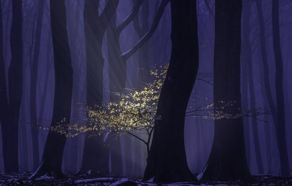 Картинка лес, лучи, деревья