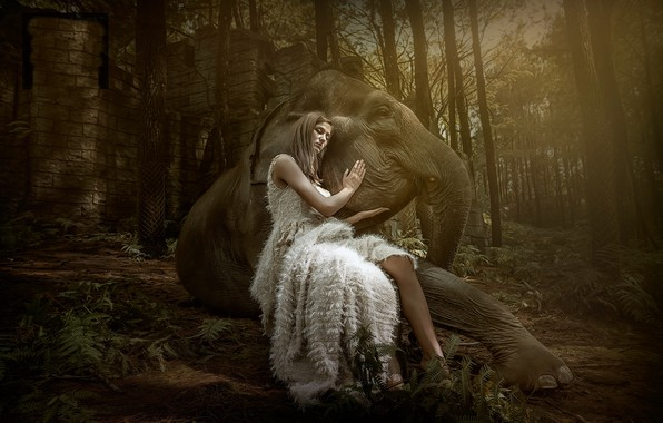 Картинка девушка, слон, ситуация
