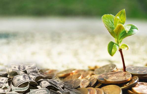 Картинка цветок, деньги, монеты