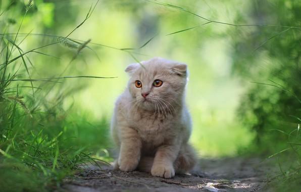 Картинка зелень, кошка, котенок, фон