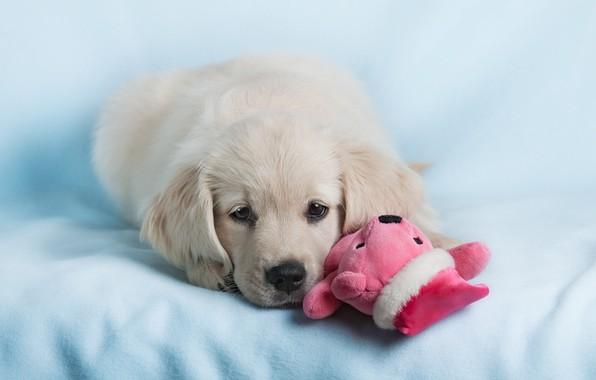 Картинка Good, Dog, Funny, Lovely, Puppy, Nursling