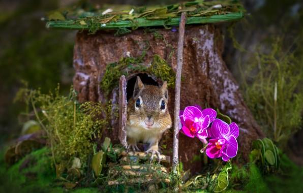 Картинка трава, цветы, мордочка, домик, бурундук, орхидеи, пенёк, грызун