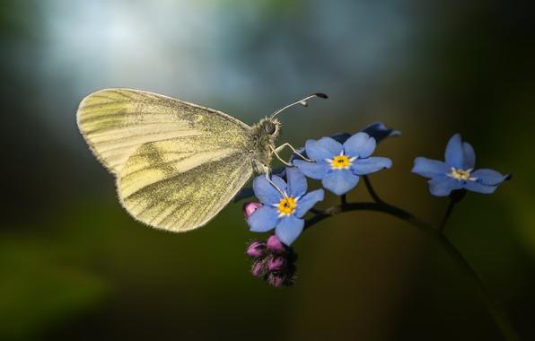 Картинка макро, бабочка, цветки