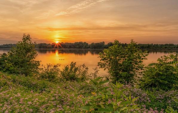 Картинка пейзаж, закат, цветы, природа, река, красота