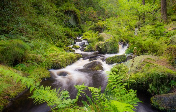Картинка лес, камни, Англия, мох, речка, Sheffield, Wyming Brook