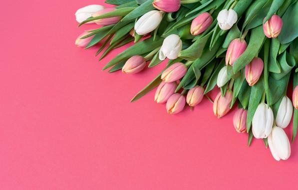 Картинка цветы, букет, тюльпаны, розовые, white, белые, розовый фон, fresh, pink, flowers, beautiful, romantic, tulips, spring