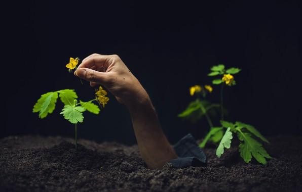 Картинка цветы, земля, рука