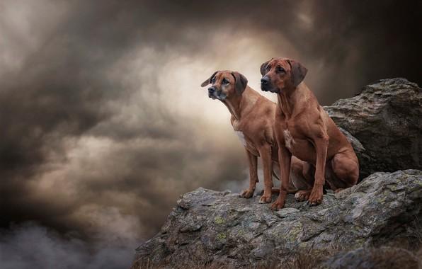 Картинка собаки, небо, взгляд, облака, тучи, природа, поза, камни, фон, обрыв, скалы, вместе, дым, две, высота, …