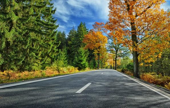 Картинка дорога, осень, лес, листья, деревья, парк, colorful, forest, road, landscape, park, autumn, leaves, tree, country, …