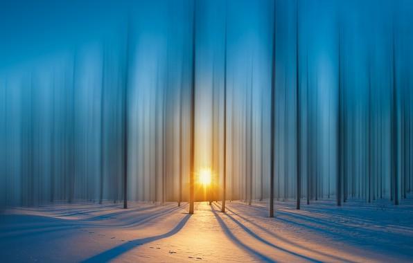 Картинка лес, лучи, снег, Солнце, forest, snow, rays, sun, royhoo