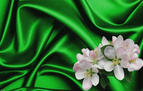 Картинка рендеринг, фон, коллаж, рисунок, картинка, холст, яблоневый цвет, зеленый шелк, складки ткани, цветы весны