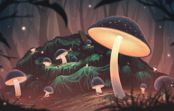 Картинка лес, ночь, грибы, свечение, арт