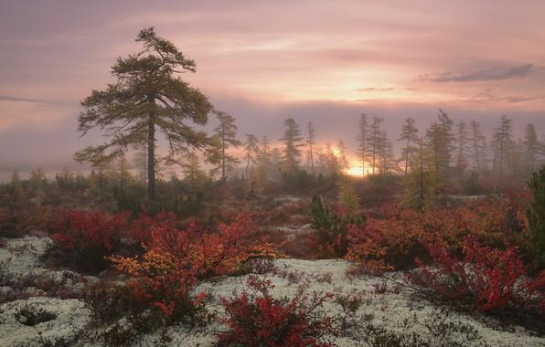 Картинка осень, природа, растения, Деревья, Колыма, Максим Евдокимов, озеро Джека Лондона