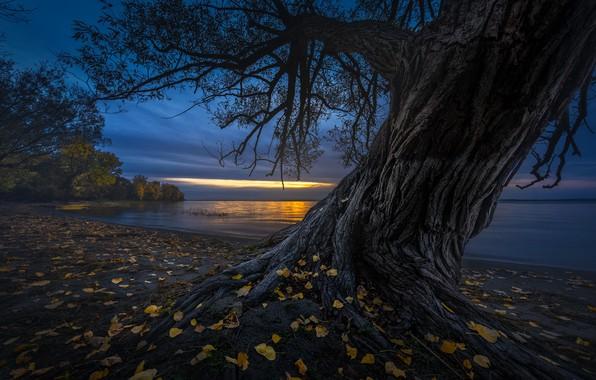 Картинка листья, ночь, дерево, берег