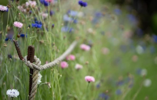 Картинка трава, цветы, верёвка