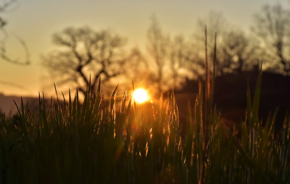 Картинка лето, трава, солнце, лучи, свет, деревья, закат, природа, настроение, холмы, вечер, дымка, размытый фон
