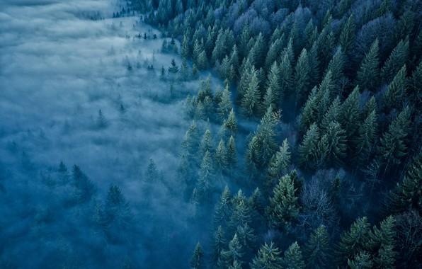 Картинка лес, деревья, туман, Франция, France, Jura Mountains, Горы Юра, Mont d'Or
