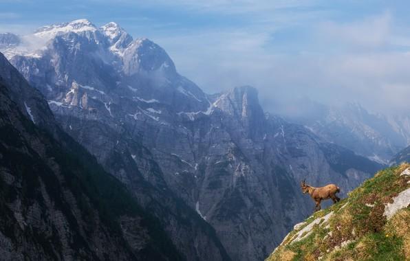 Картинка небо, горы, горный козёл