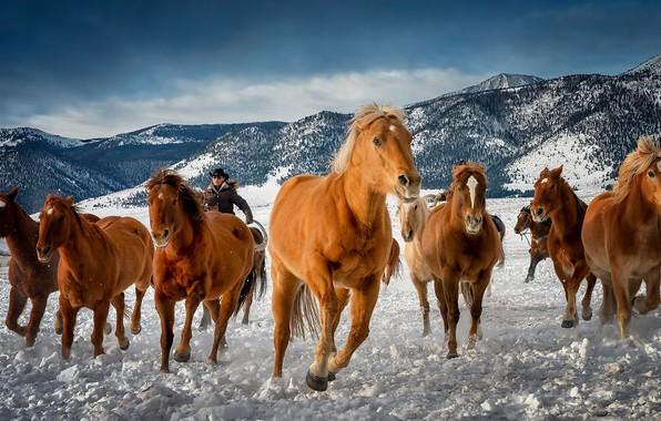 Картинка зима, горы, кони, лошади, Колорадо, табун