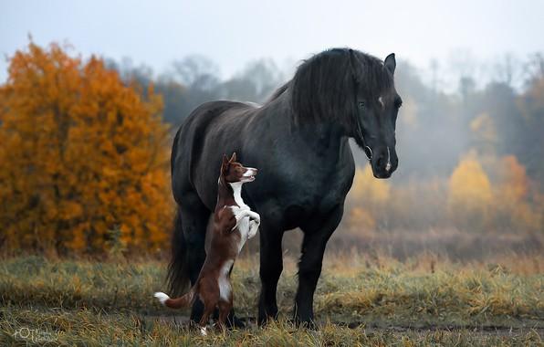 Картинка осень, конь, лошадь, собака, стойка, Наталия Поникарова