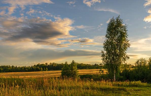 Картинка облака, деревья, природа, Березуцкий Александр