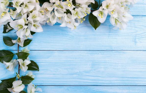 Картинка цветы, весна, white, белые, цветение, wood, blossom, flowers, spring
